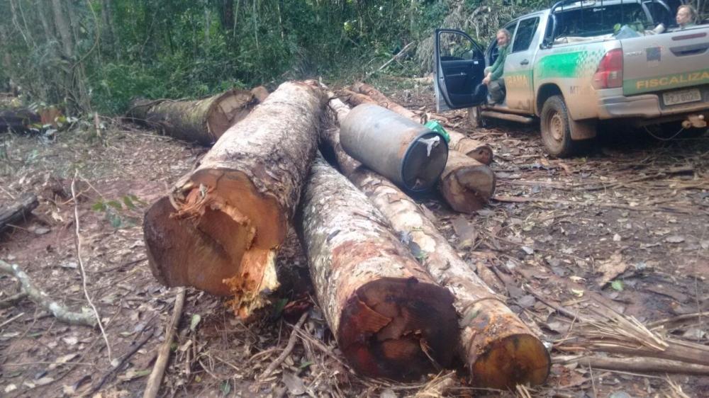 Fiscais em local de extração ilegal - Foto: Ibama